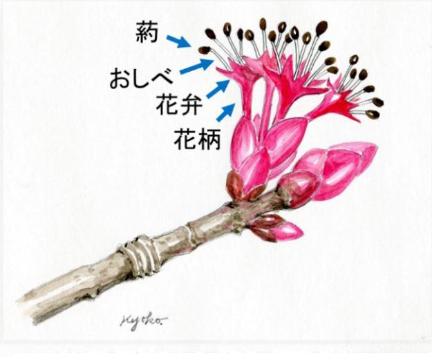 rijityou12-12901
