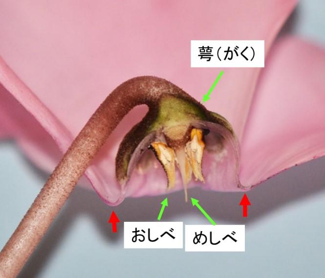 rijityou01-12