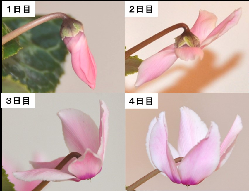 rijityou01-13