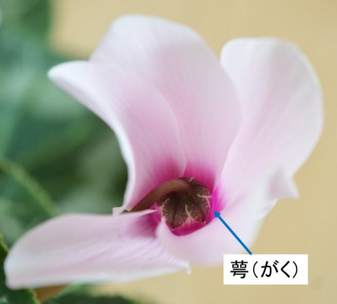 rijityou01-10