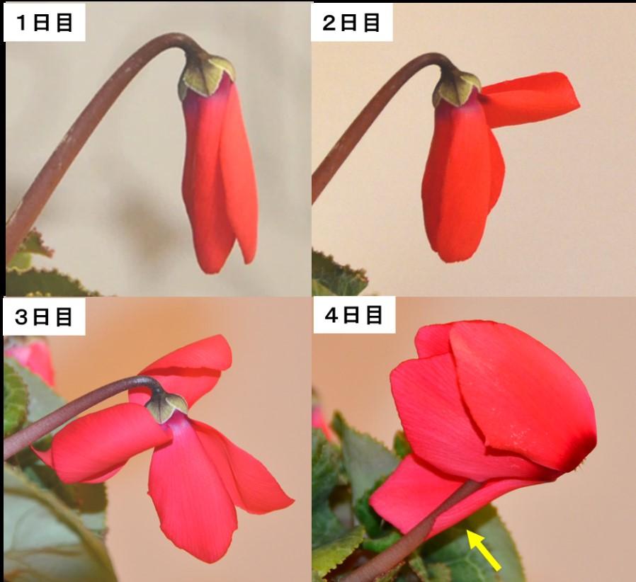 rijityou01-15